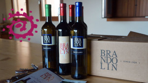 brandolin-vini